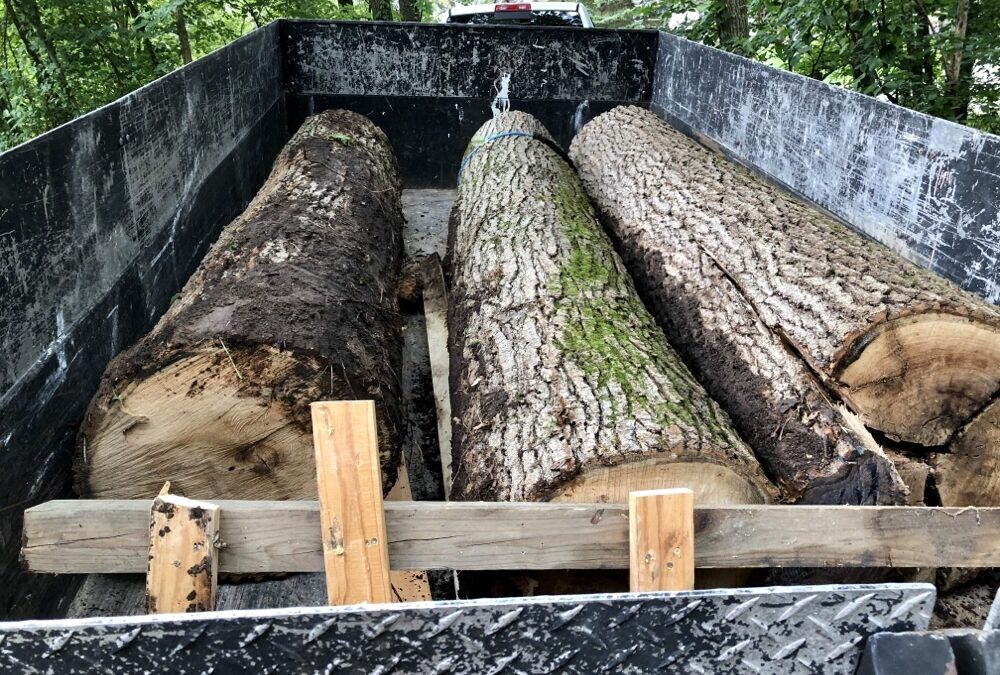 Ultimate Recycling-DIY Trees To Boards